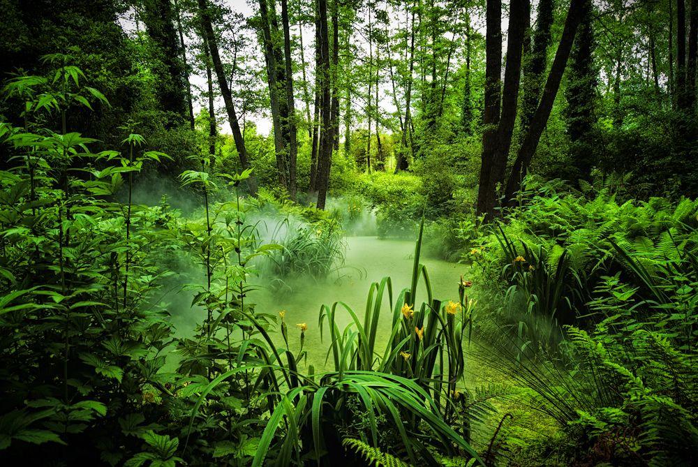 Jungle Fever Le Jardin Des Olfacties Coex France Landscape