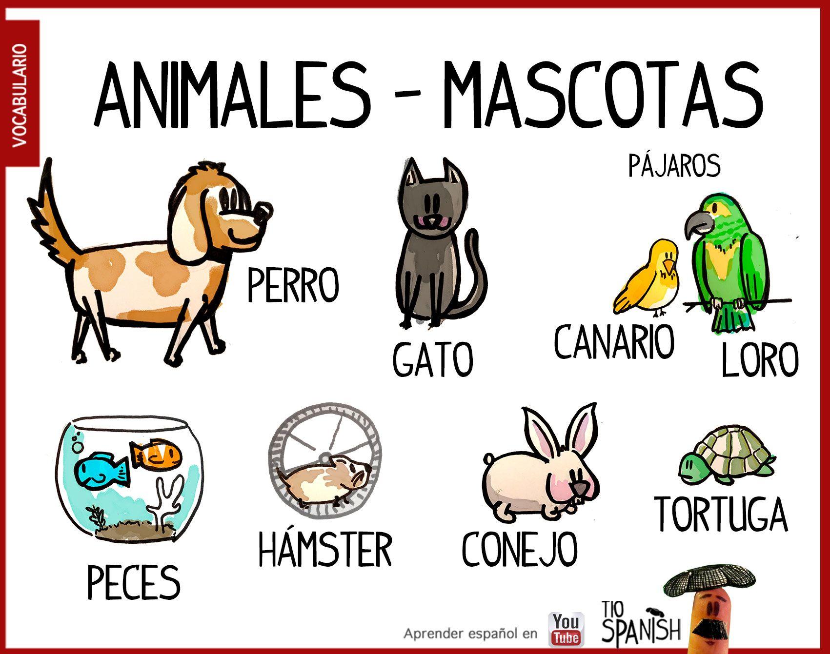 Las mascotas, animales domésticos en español. Vocabulario español inicial  animales