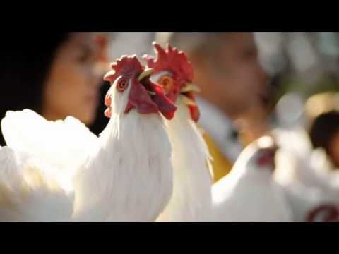 Foster Farms TV Commercial, 'Africa' - YouTube