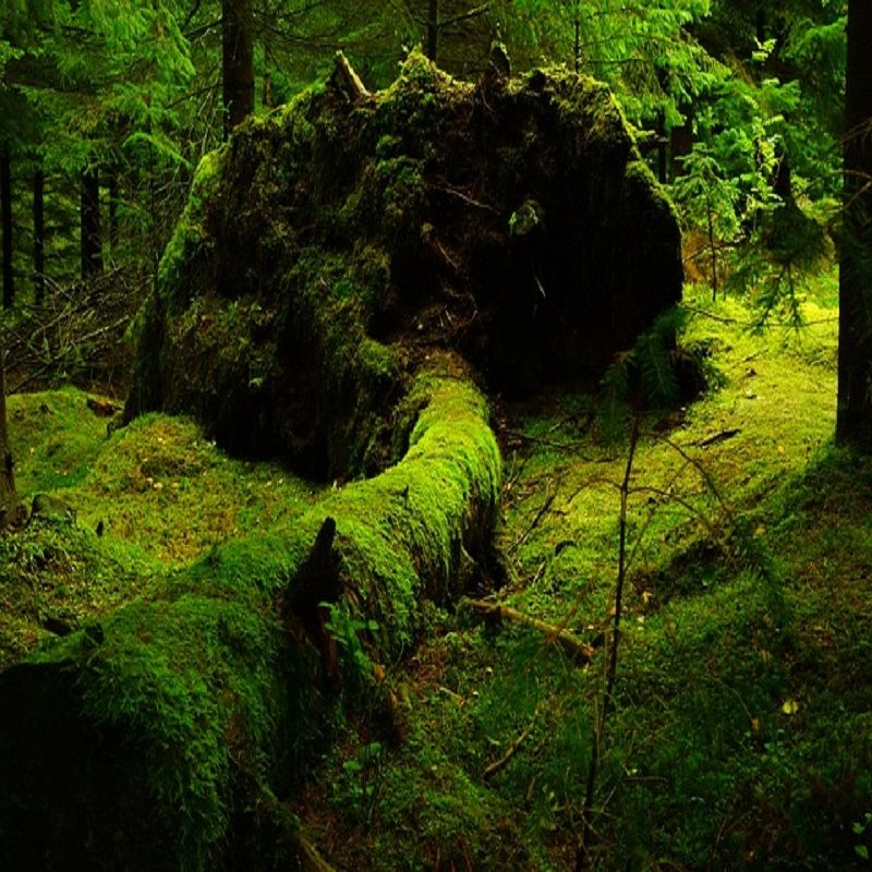 """The Hoia-Baciu Forest 