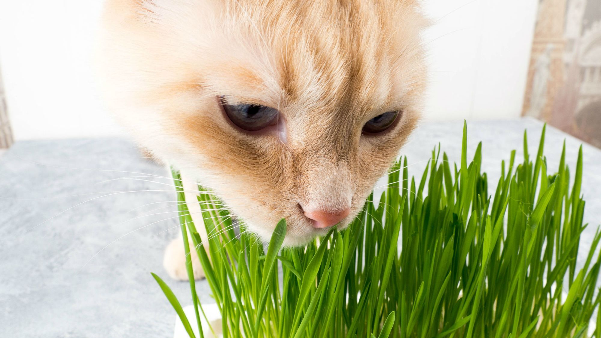 Why Do Cats Eat Grass? Scientists Might Have Figured It