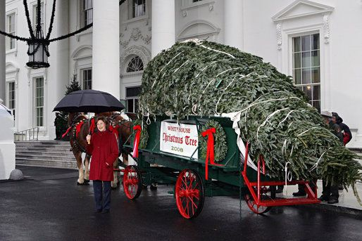 Arrival of the White House Christmas Tree - Bingo for Patriots