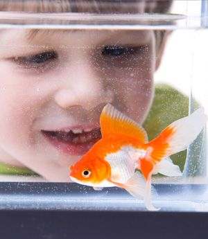 Is A Pet Fish For You Class Pet Opinion Writing Best Pets For