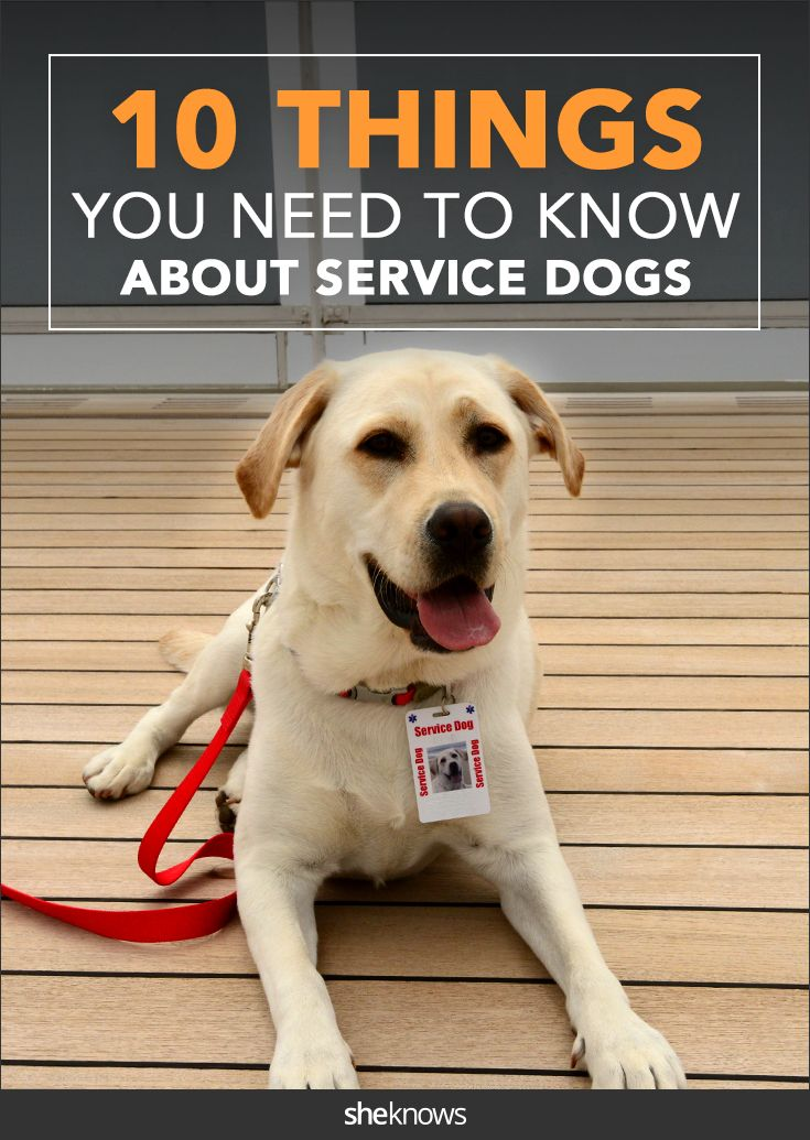 If You Ve Ever Reached Out To Pet A Service Animal Read This