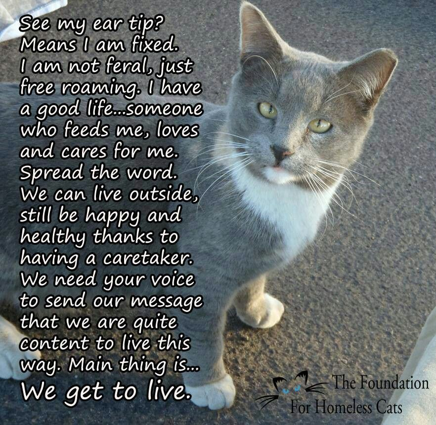 TNR !!! (With images) Feral cats