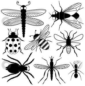 Insect Coloring Pages InsectsBugs Pinterest Insects