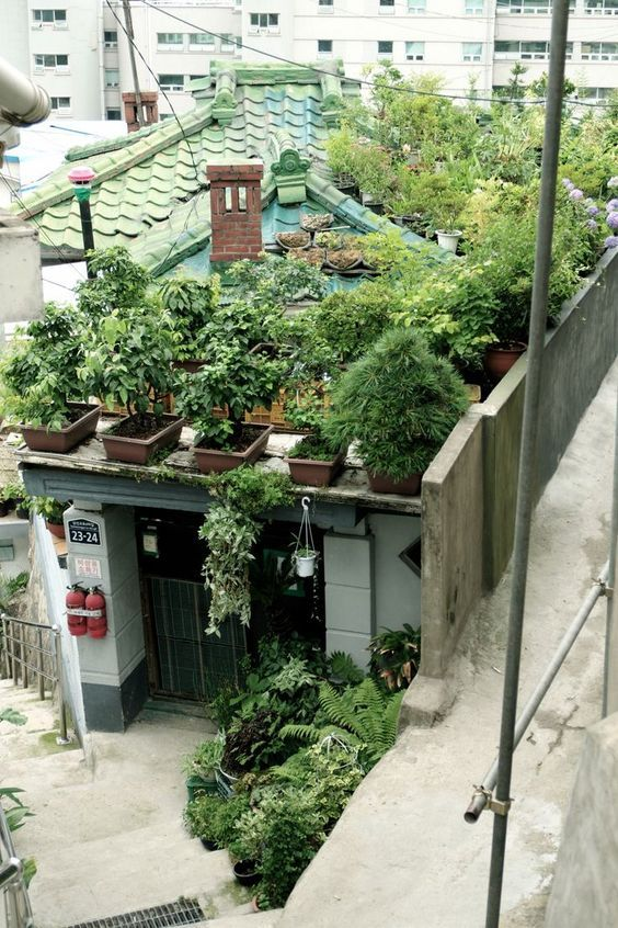 Urban Gardening Growing Container Gardening On The Roof 屋上
