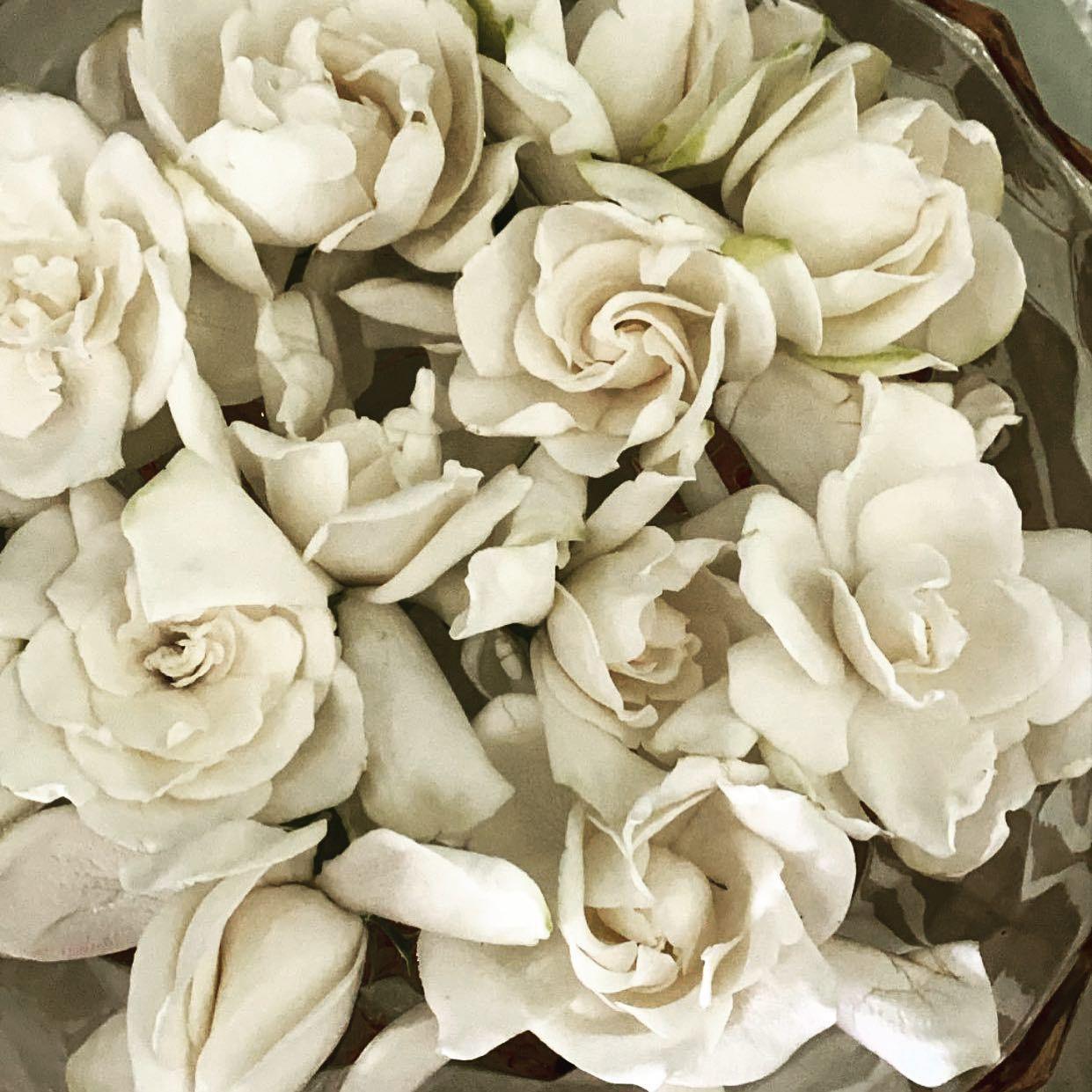 Scent Memories In 2020 Gardenia Flowers Floating Flowers