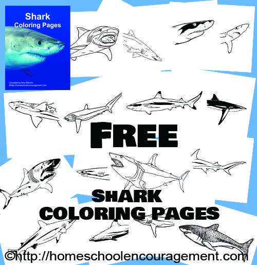 Free Shark Coloring Pages For Shark Week And More Shark