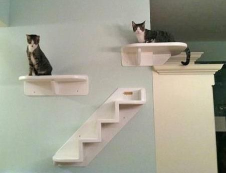 Delightful Wall Mounted Cat Furniture. Our Wrap Around Corner Cat Shelf Is Here! This  Wall