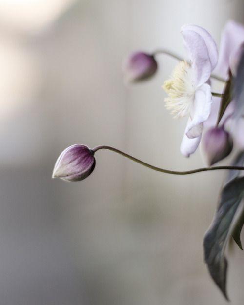Artetdeco81 Photographie De Fleur Photo Fleurs Fleurs Nature