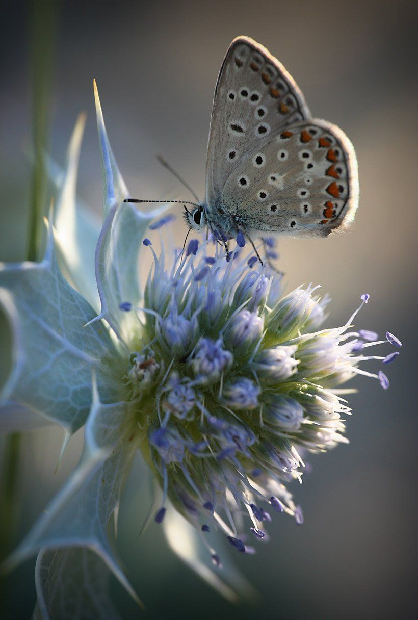 butterflies in the garden. click through for great prices on
