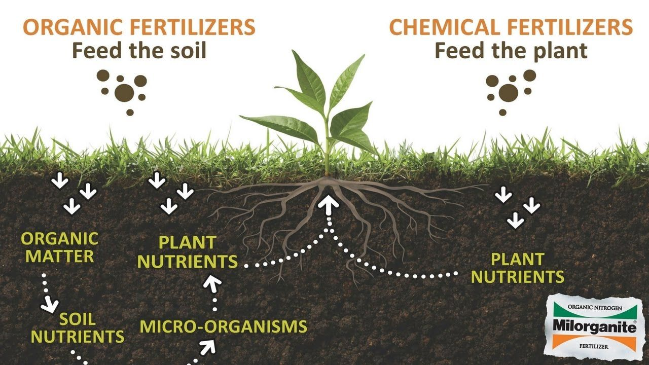 What Are The Benefits Of An Organic Lawn Organic Lawn Organic Fertilizer Organic Plants