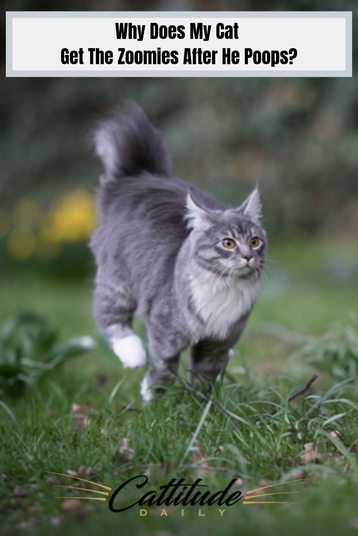 Why Is It That My Cat Gets The Zoomies Cats Cat Behavior Cat Lovers