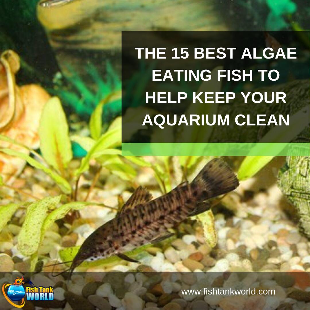 Algae Eaters 15 Fish Invertebrates To Help Keep Your Aquarium Clean Fresh Water Fish Tank Fish Tank Cleaning Diy Fish Tank