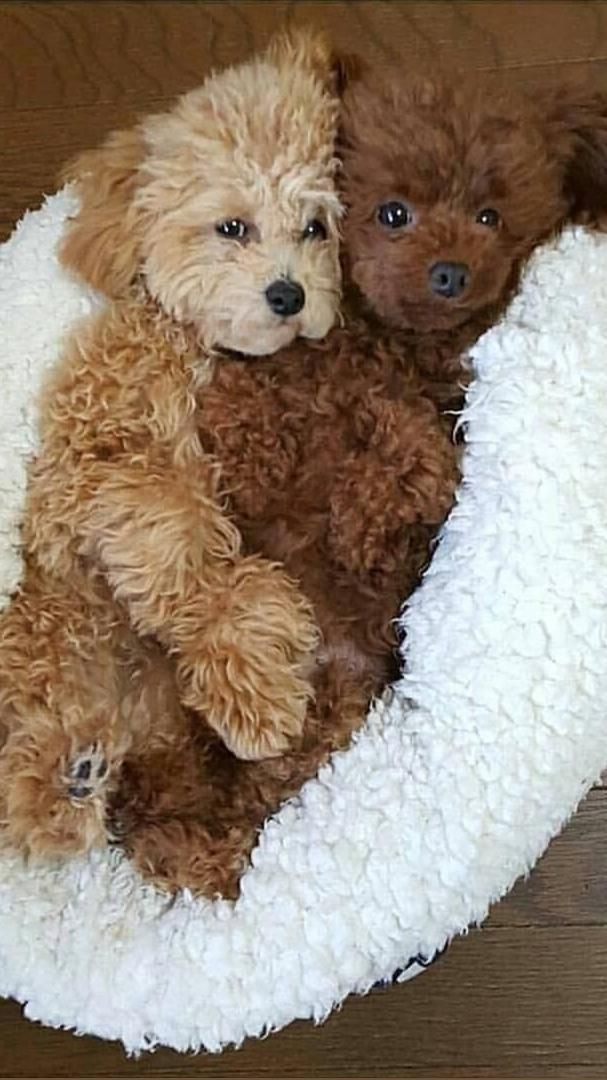 Look at these Cuties! Who doesn't love dogs? | Doggie Desires