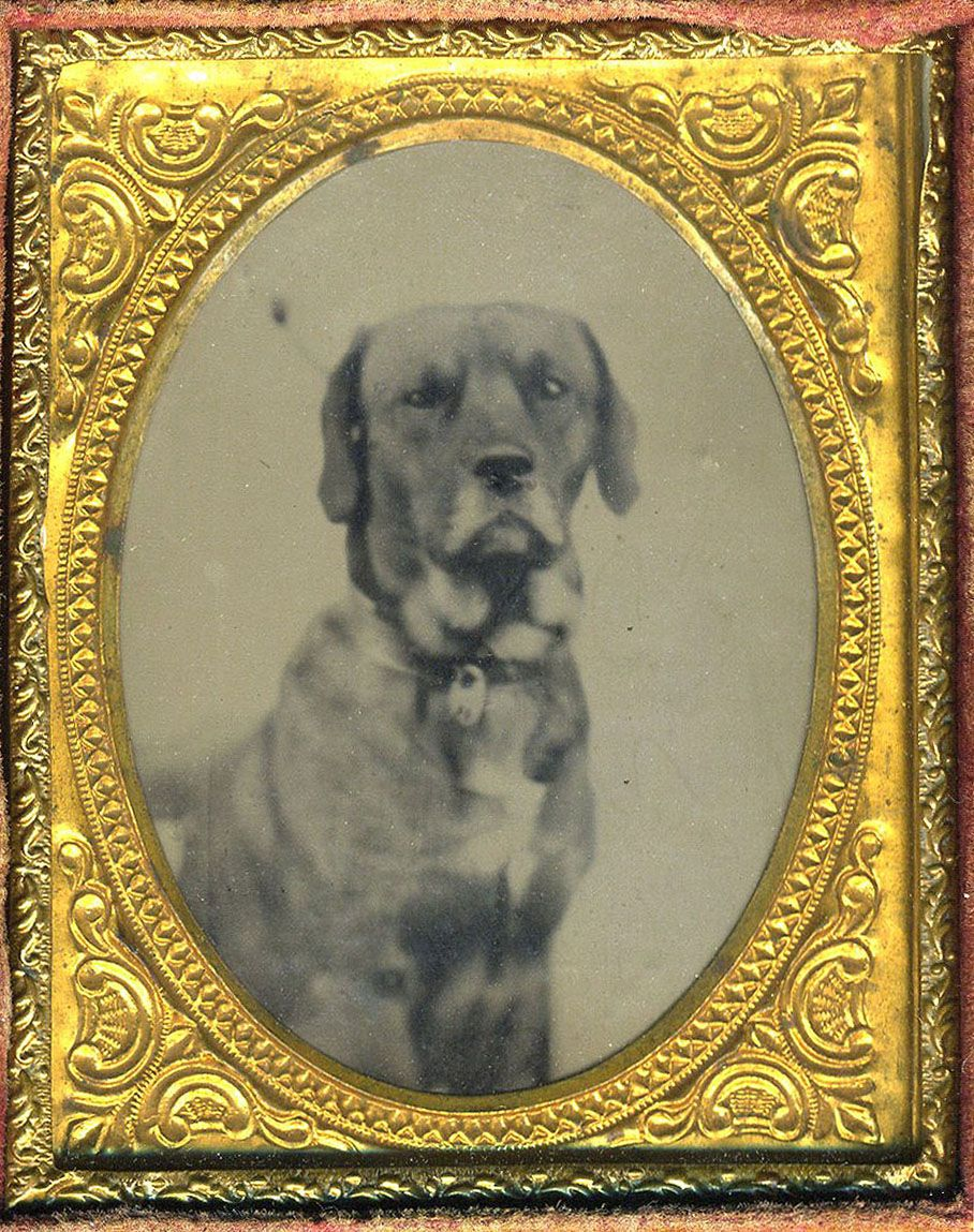 1/9-plate tintype of hound with tag on collar.  From bendale collection