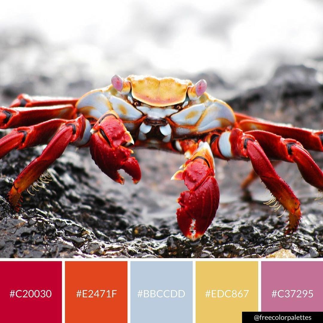 King Crab Beach Color Palette Inspiration Digital Art Palette