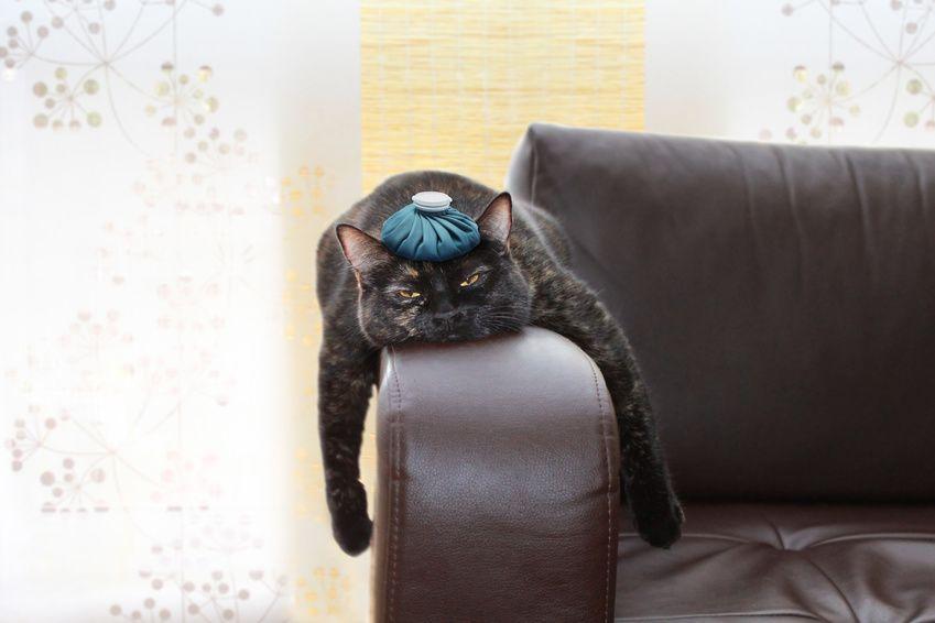 Die 10 Haufigsten Katzenkrankheiten Und Ihre Symptome