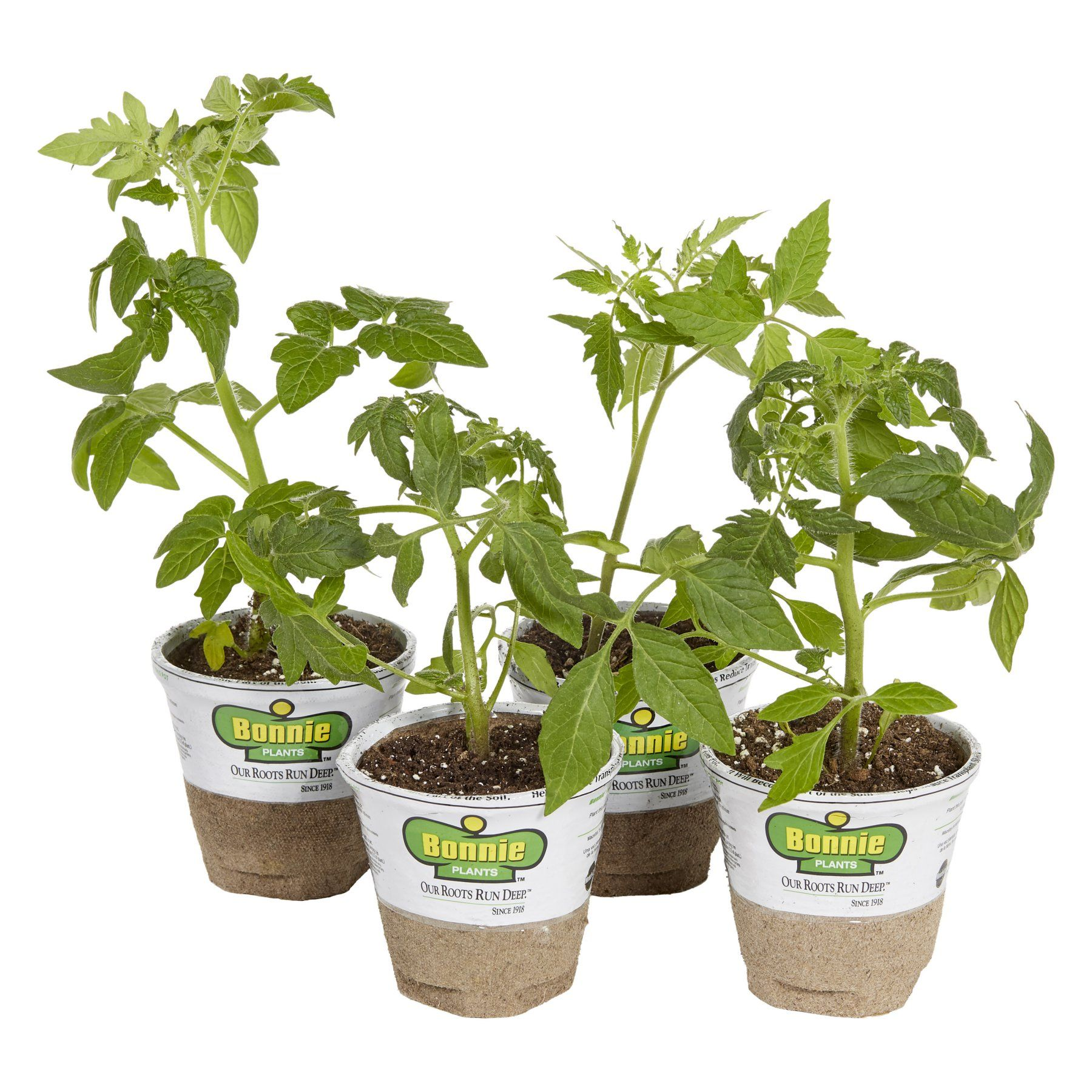 Bonnie Plants Bonnies Top Tomatoes Set Of 4 Live Plants