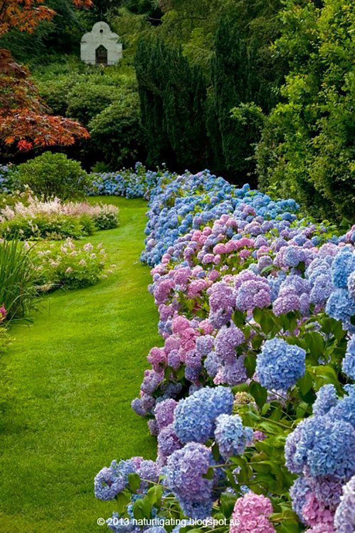 Hydrangea Border Around Garden