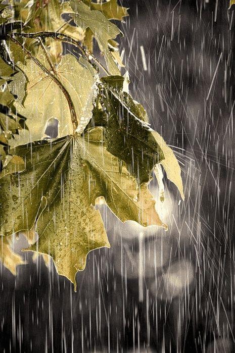 Leaves in the rain