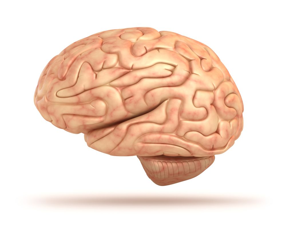 Human Brain: Facts, Functions & Anatomy | Science~ | Pinterest