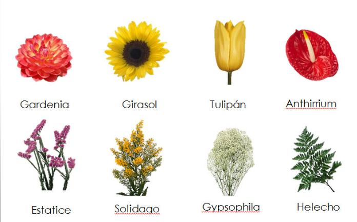 Imagenes de flores con nombres flores hermosas pinterest - Clase de flores y sus nombres ...