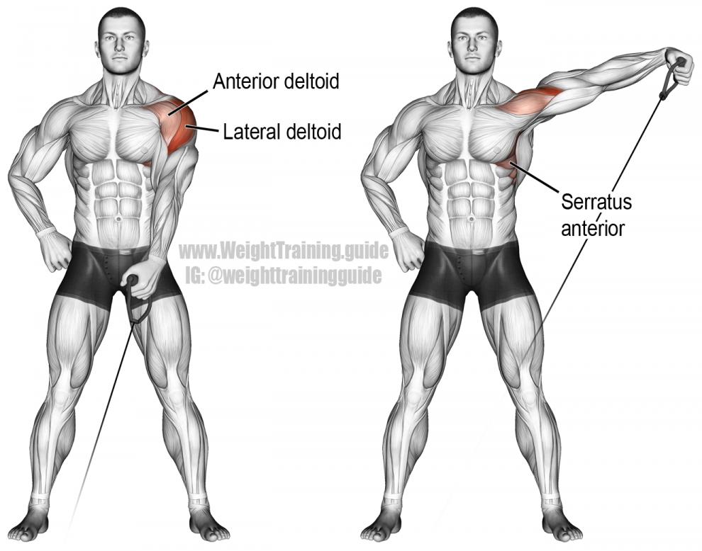 полные курсы прокачки мышц в картинках жигалов