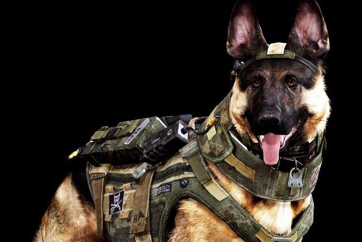 Must see War Army Adorable Dog - 374546bdc19e020bd06a0cc8e874f2e2  Photograph_367118  .jpg