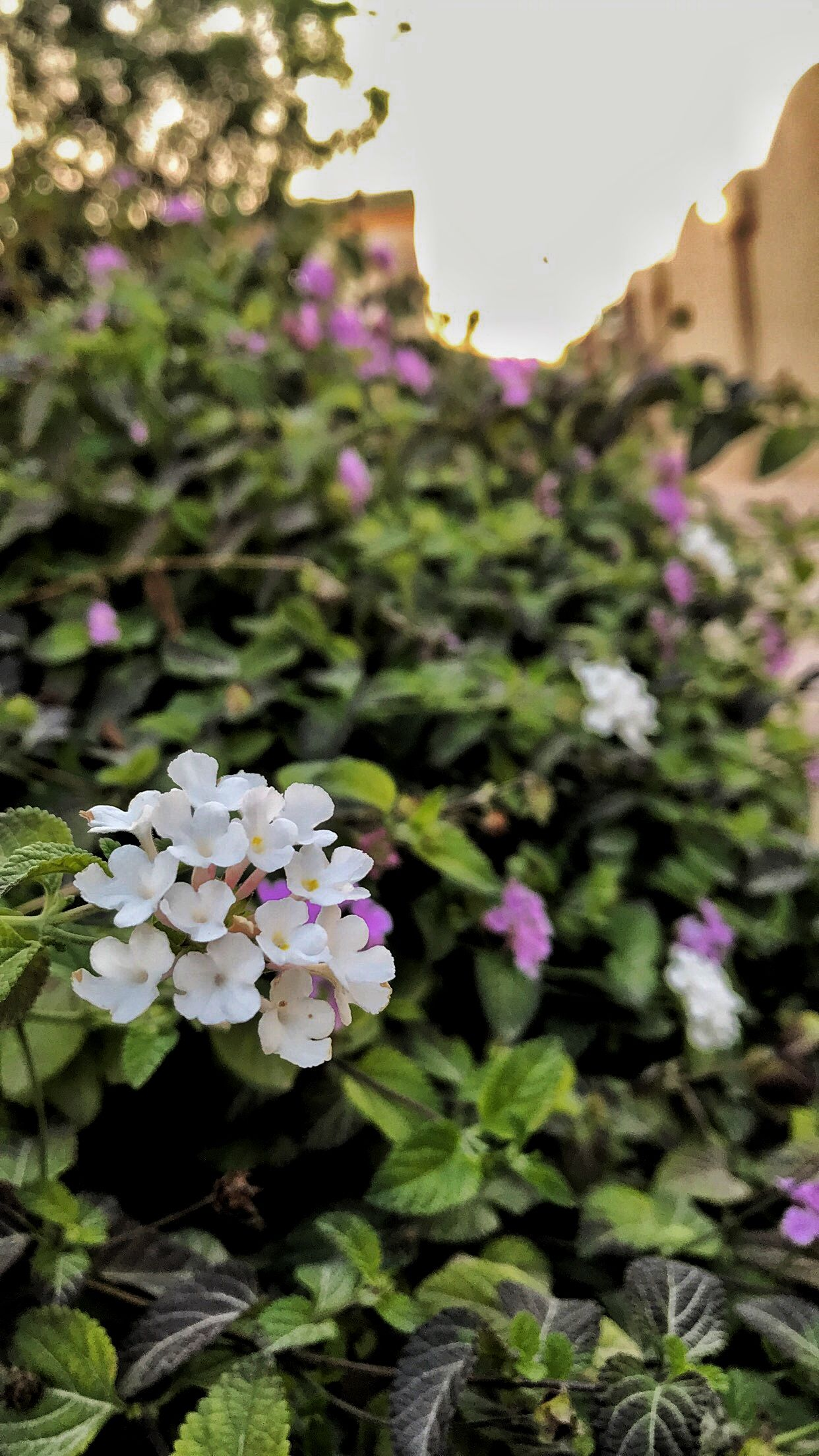 Pin By بثينة الكواري On ورد الربيع Plants Grapes Fruit