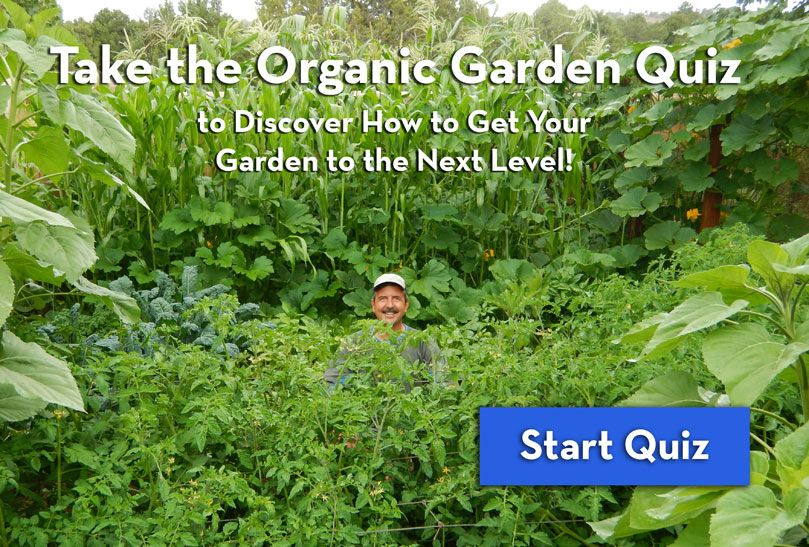 Take The Organic Garden Quiz It Will Help You Discover The Best