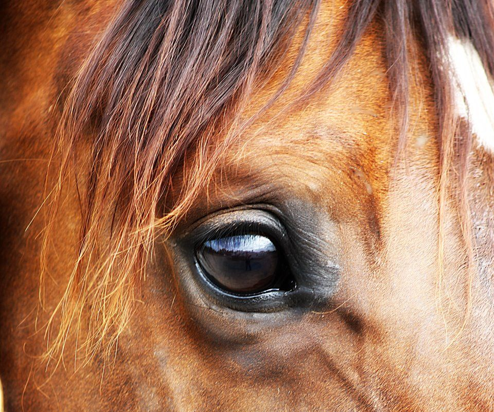 Beautiful Horse Eye Photography images   art   Horses