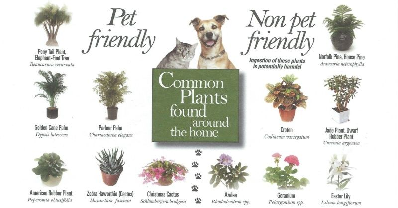 Animals Earthly Mission Dog Safe Plants Cat Safe Plants Plants