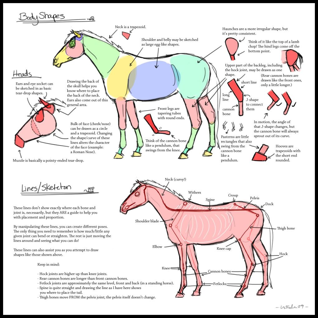 Shapes In Drawing Horses Anatomia Animal Anatomia Animales