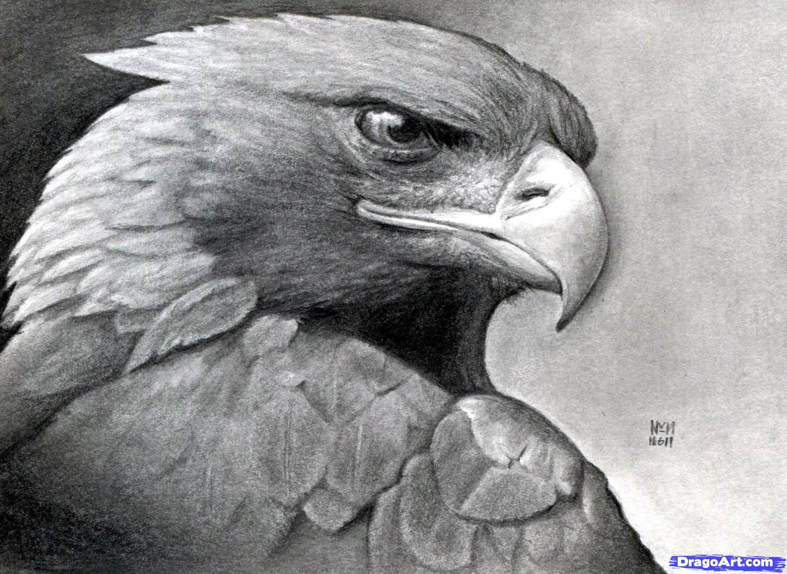 How to Draw a Eagle | How to Draw a Realistic Eagle ...