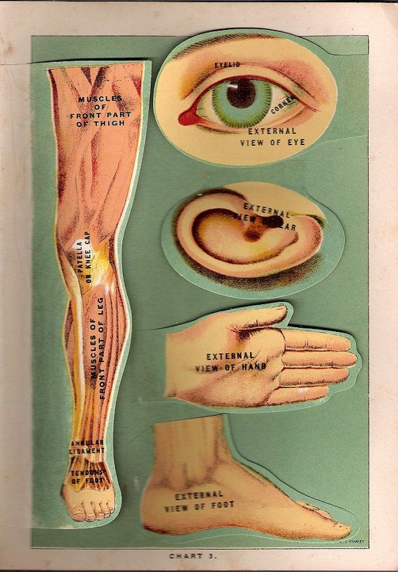 1917 Antique Medical Flip Chart of different Body Parts