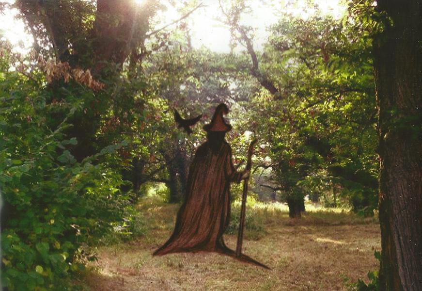 L'immagine può contenere: una o più persone, persone in piedi, albero, pianta, spazio all'aperto e natura