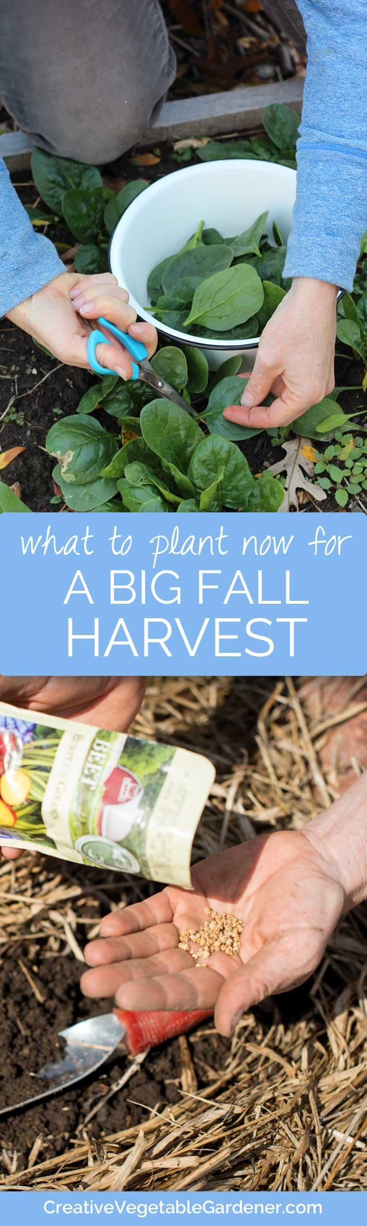 What to Plant NOW for Great Fall Harvests - Creative Vegetable Gardener
