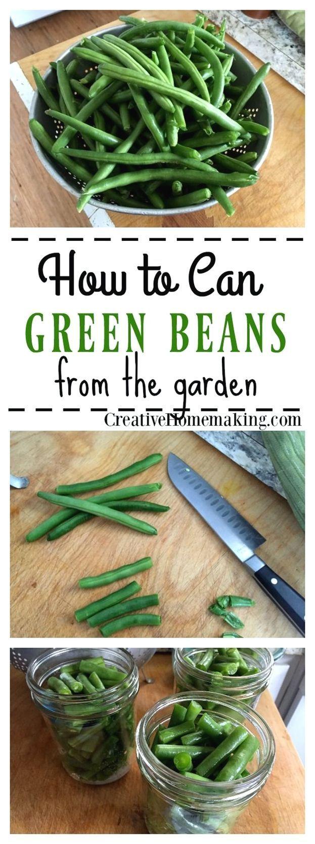 Gardening For Beginners Reddit Gardeningforbegginers