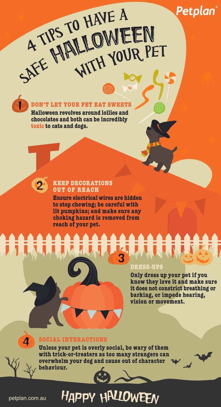 Petplan's top tips for your pets this Halloween! Your