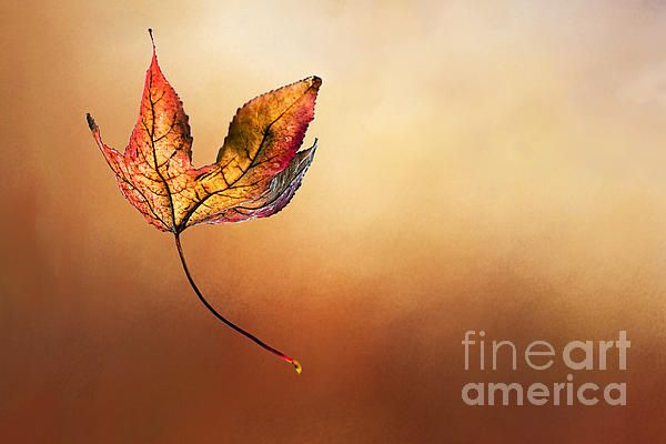 #AUTUMN #LEAF #FALLING by #Kaye #Menner #Photography Quality Prints and Cards at:  http://kaye-menner.artistwebsites.com/featured/autumn-leaf-falling-by-kaye-menner-kaye-menner.html
