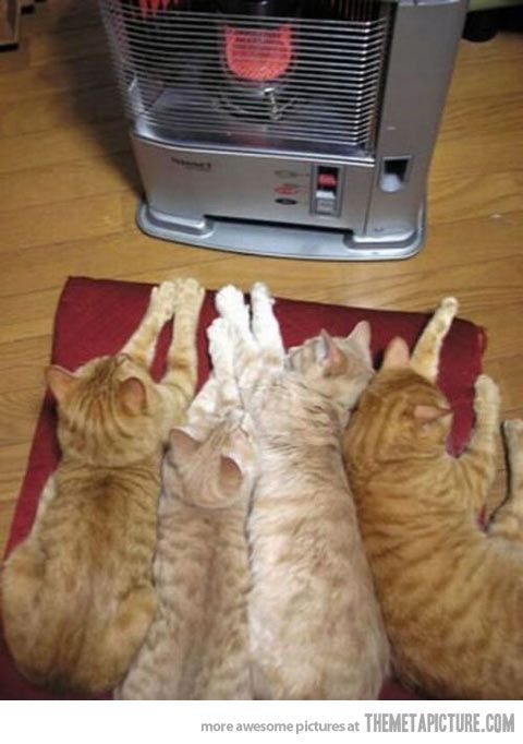 how cats stay warm in the winter cats cats kittens pets