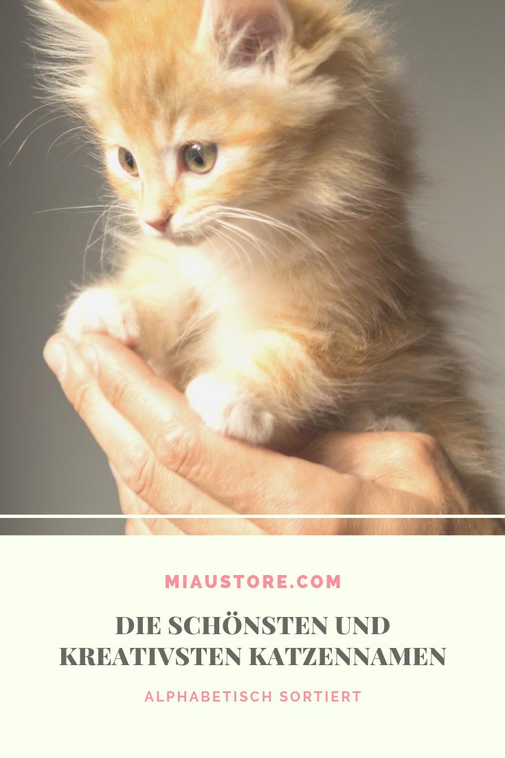 Katzennamen Beliebteste Namen Fur Weibchen Und Mannchen Katzen