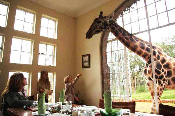 Africa - Everyone who visits Giraffe Manor has this picture (this is not mine, but I have one like it) - breakfast with the giraffes - such an amazing experience!