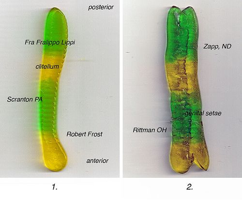 Gummy Worm Dissection Life Science Science Resources