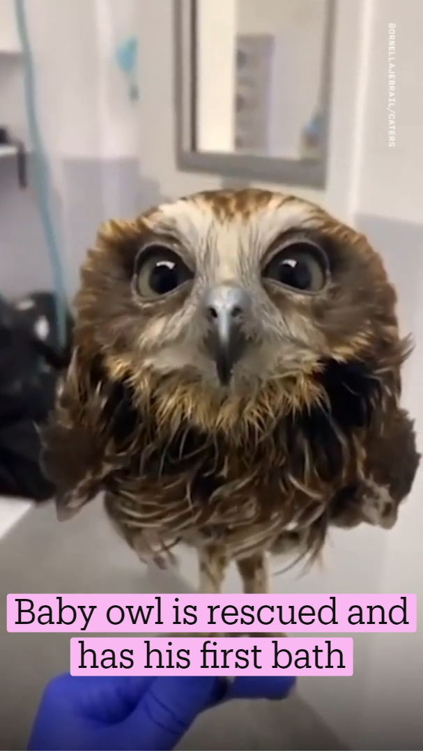 Baby owl is rescued and has his first bath