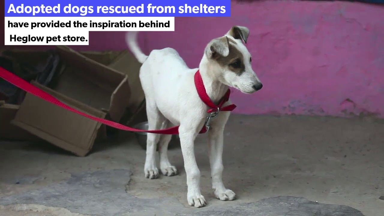 Heglow Com With Images Dog Adoption Rescue Dogs Pet Store