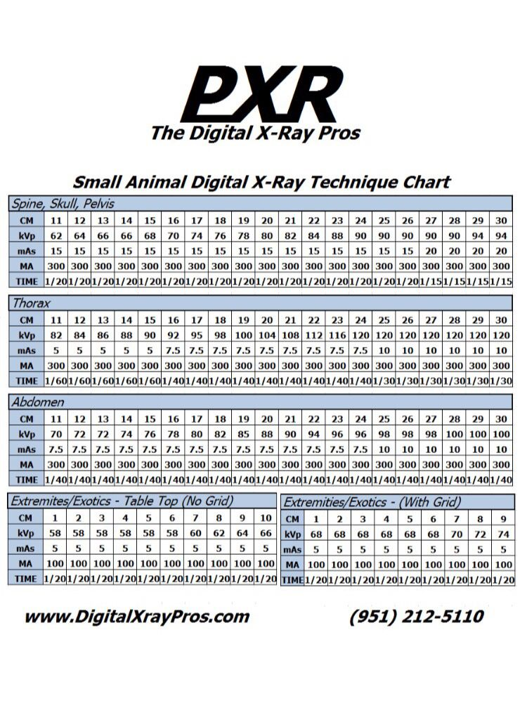 Small animal digital x ray technique chart the digital x ray pros