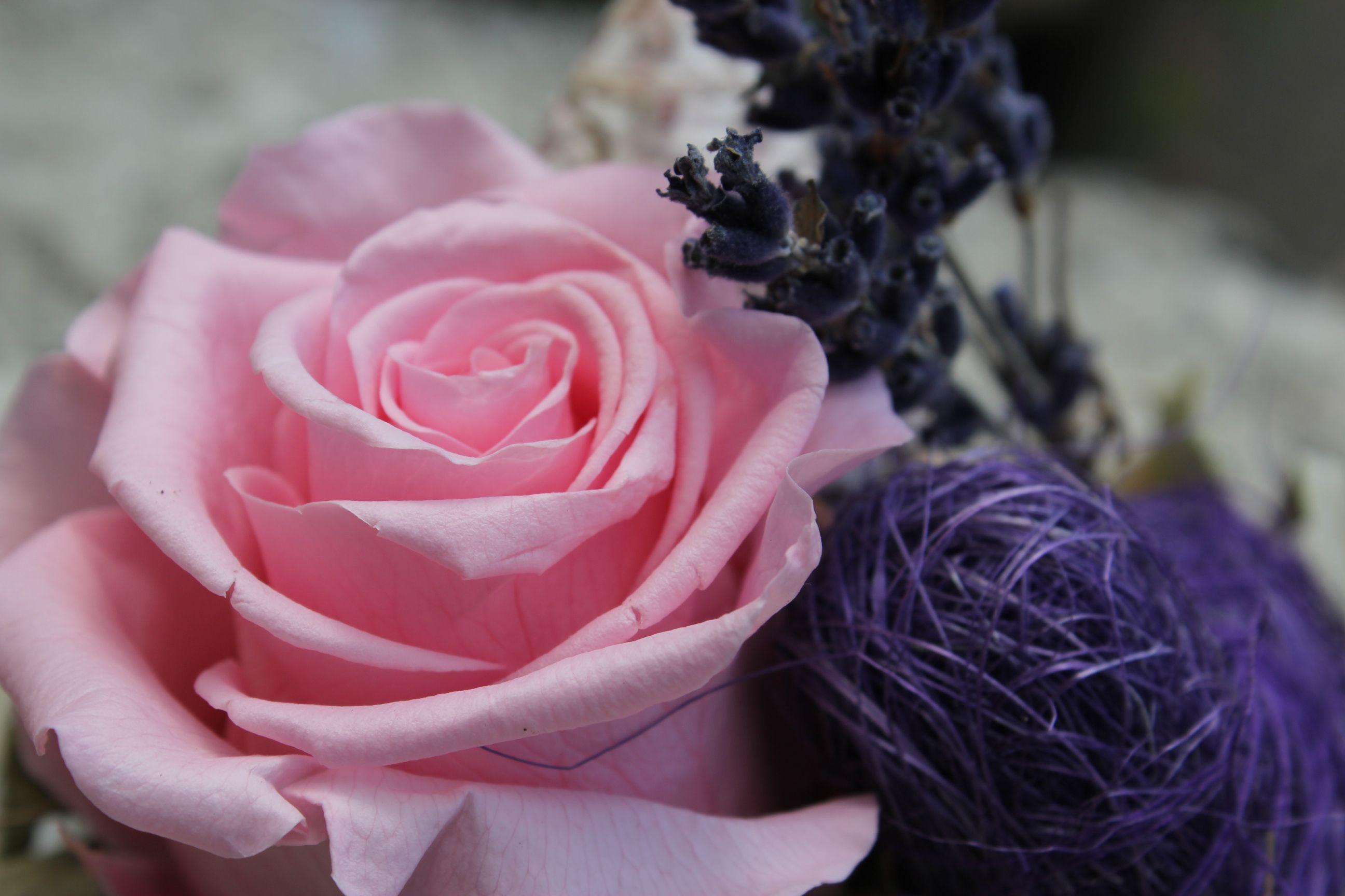 Stabilisierte Rosenblüte   Gefriergetrocknete Rosen ...